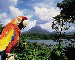 Teach-English-Costa-Rica-Parrot