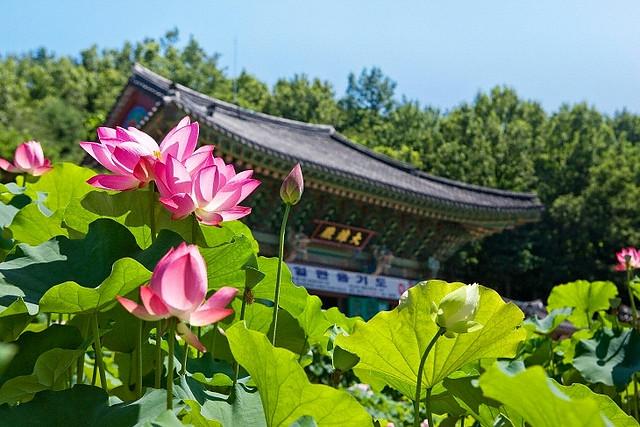 south-korea-teacher-temple