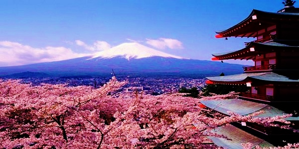 Teach English in Japan & Experience the Sakura Cherry Blossoms of Spring