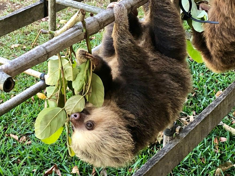 Marnie Kogos - Costa Rica - Sloth