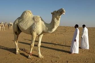 Salaries for Teaching English in Kuwait