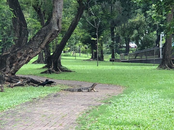 Nicola Rae - Bangkok, Thailand - Lumpini Park 2