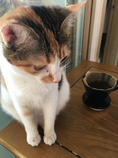 Teaching English South Korea pets