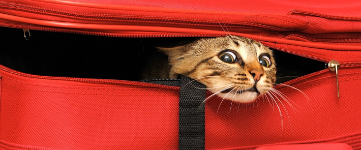 cat-travel.png