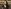Follow the Thread