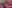 Teaching English in Chachoengsao, Thailand: Alumni Q&A with Courtney Clark