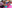 Teaching English in Pattaya, Thailand: Alumni Q&A with Laura Pearce