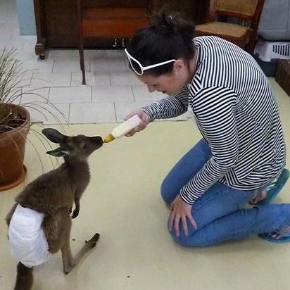 Lynda Kangaroo Australia