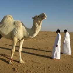 Teaching English in Saudi Arabia